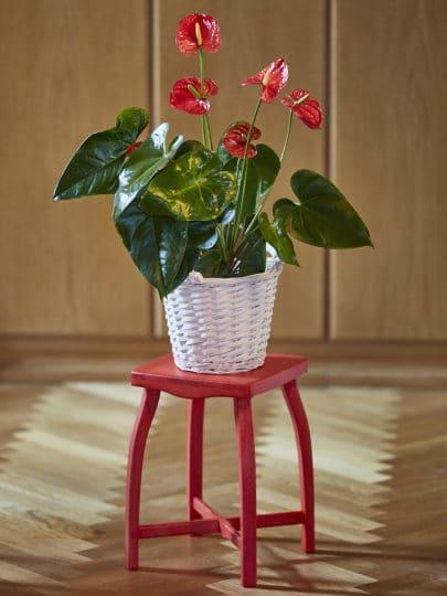 Sella 35 použitá jako elegantní podstavec pod květinu